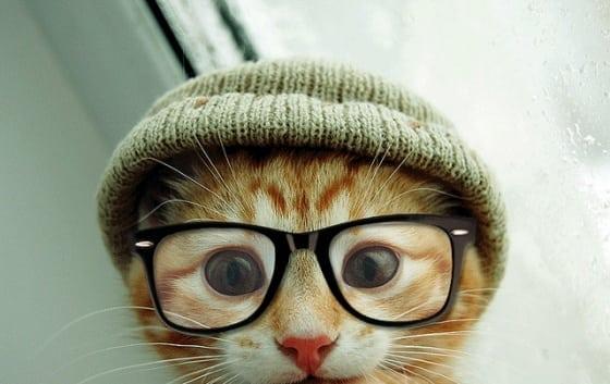 SEO Kitty