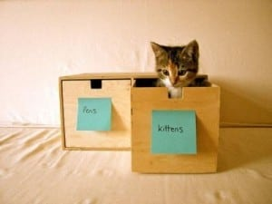 organize your kittens